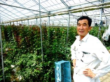 現在栽培しているバラは50種類。年間320万本生産されている。